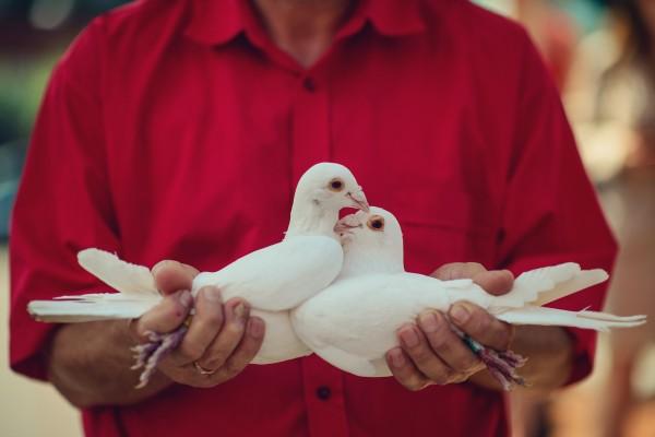 Białe gołębie, które będą wypuszczane przed kościołem