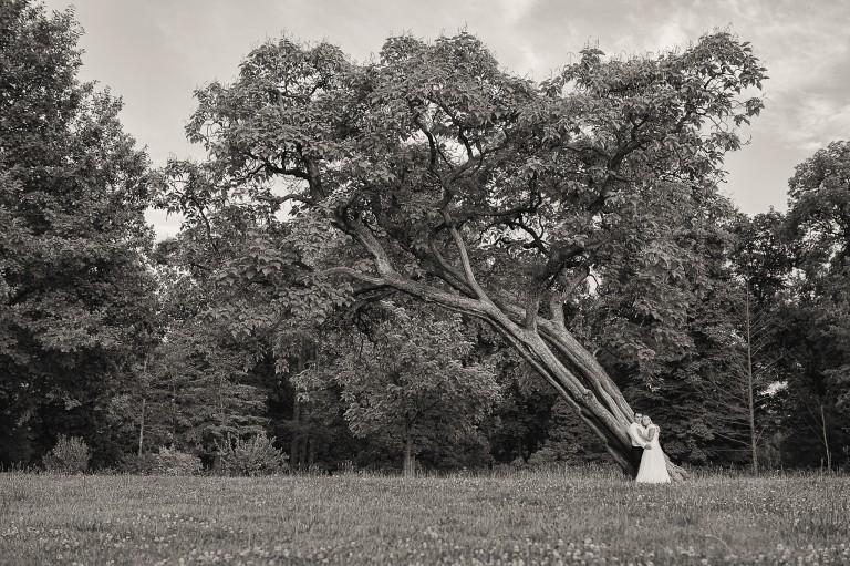 Para Młoda pod drzewem, sesja plenerowa Leśnica